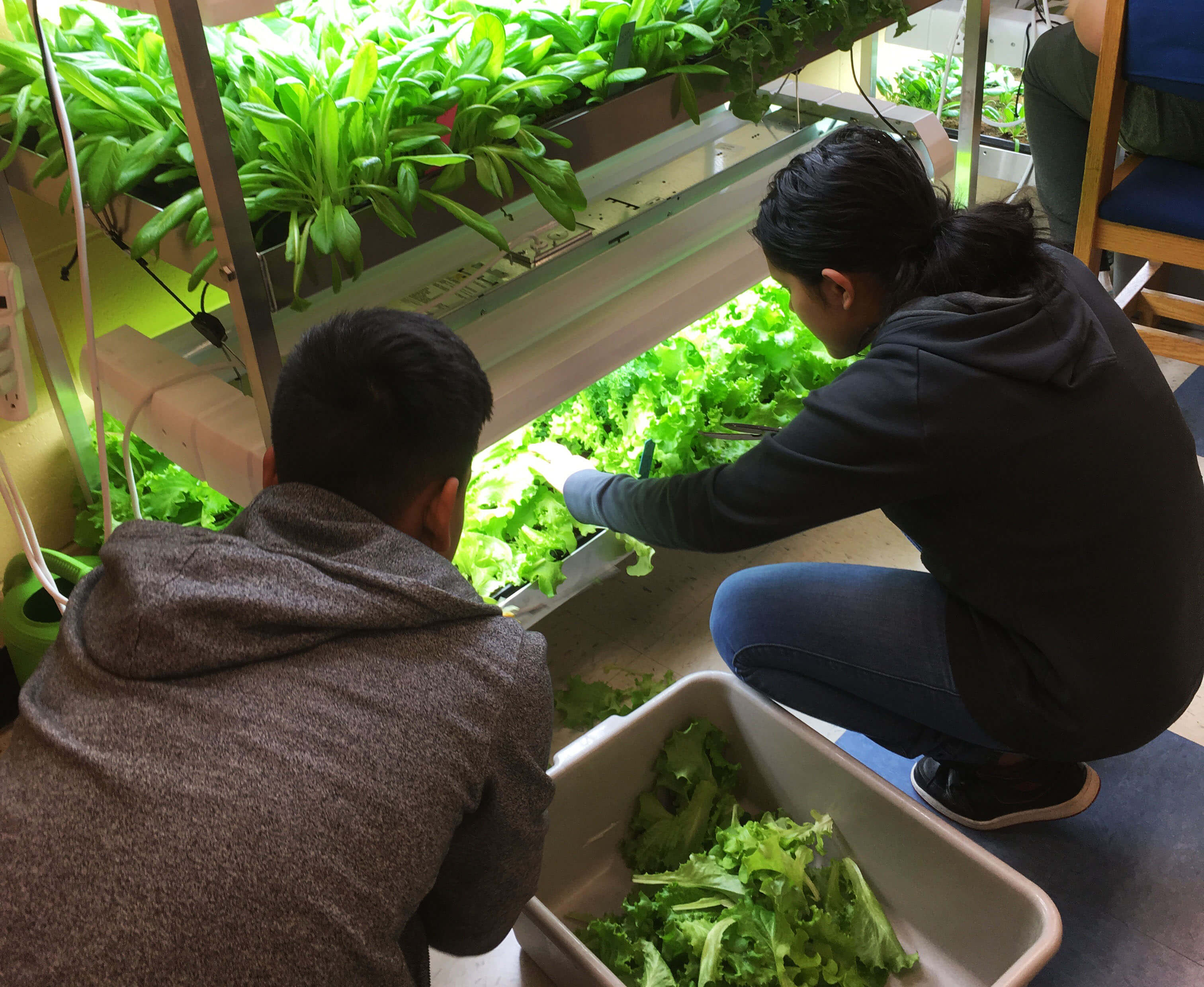 PRESS RELEASE: William J. Dean Technical High School Partners with EvanLEE Organics to Grow Organic Greens and Produce